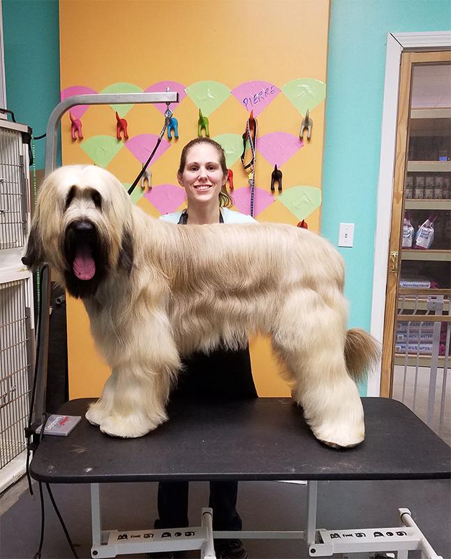11 groomed dog