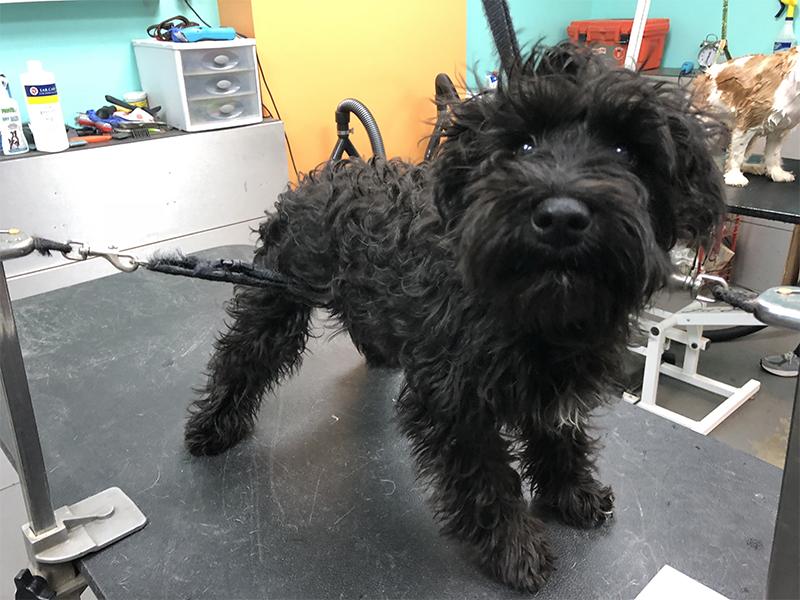 14 groomed dog