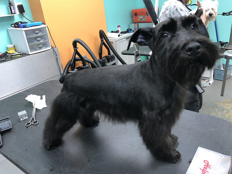 15 groomed dog